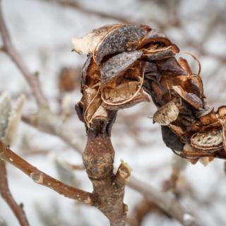 Magnolia Seed Case - Ellie Kennard 2014