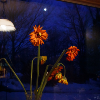 Full Moon Window - Ellie Kennard 2014