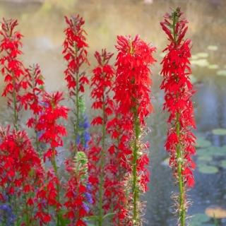 Flowers at Botanical Gardens - Ellie Kennard 2014