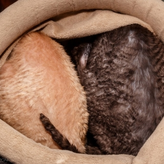Rupert and Molly sulking in bed - Ellie Kennard 2014