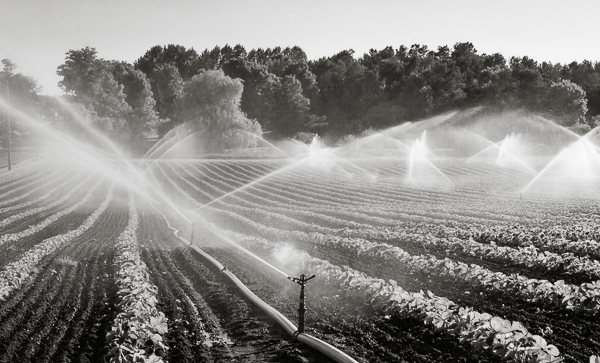 Strawberry Fields Forever toned monochrome print