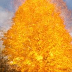 A blaze of colour - multiple exposure, fall – Ellie Kennard 2015