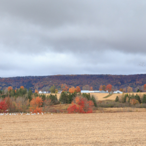 Farmland in Autumn, Hillaton, Nova Scotia Ellie Kennard 2016