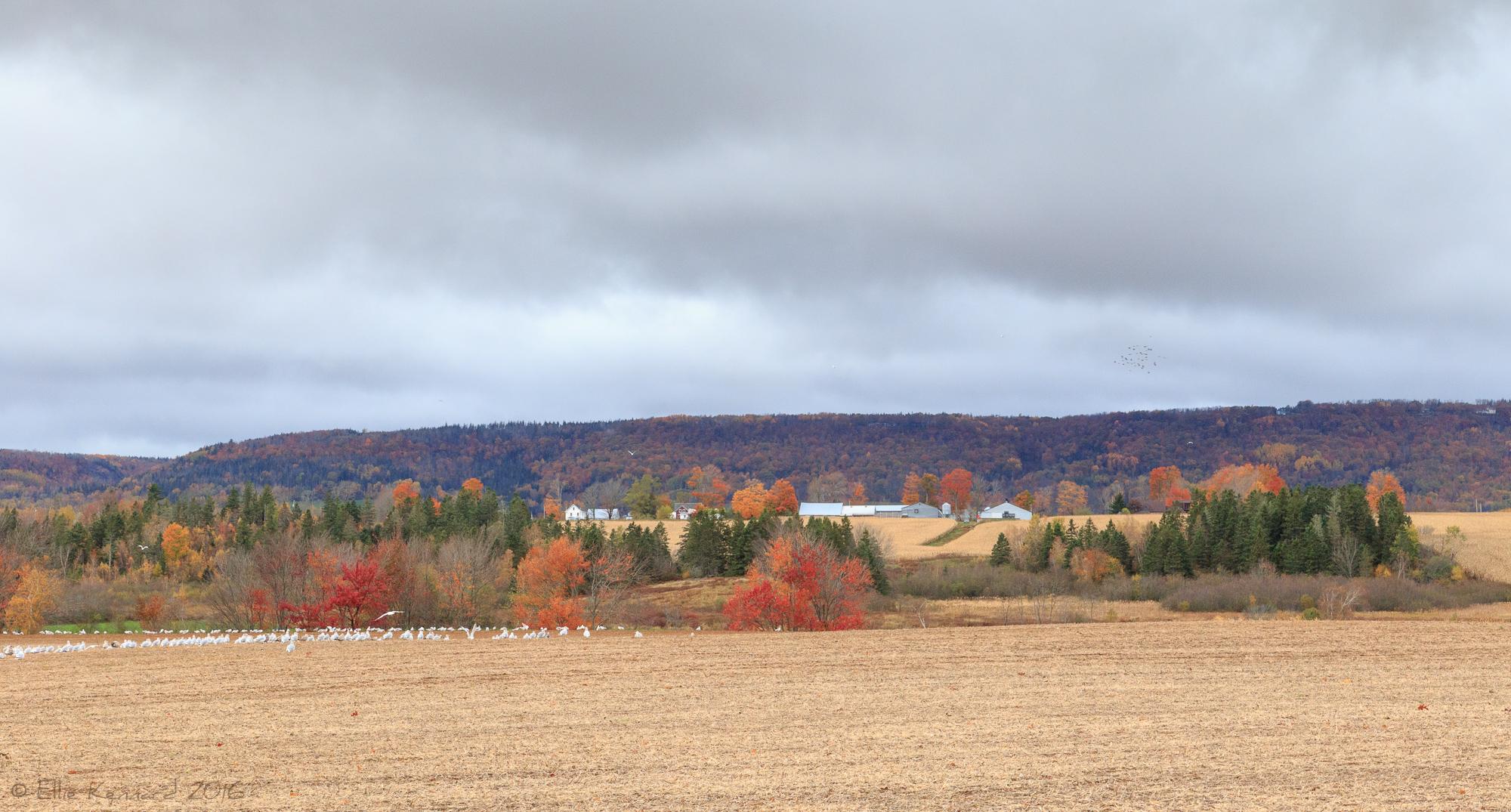 Farmland in Autumn, Hillaton, Nova Scotia - Ellie Kennard 2016