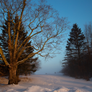 Foggy snow afternoon