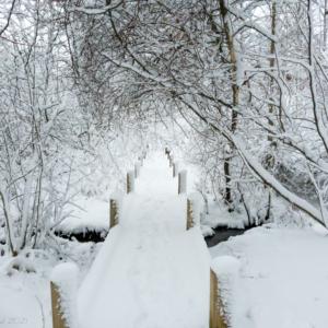 Snow path January 2021