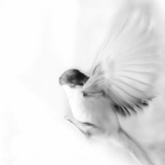 Feather - Ellie Kennard 2012