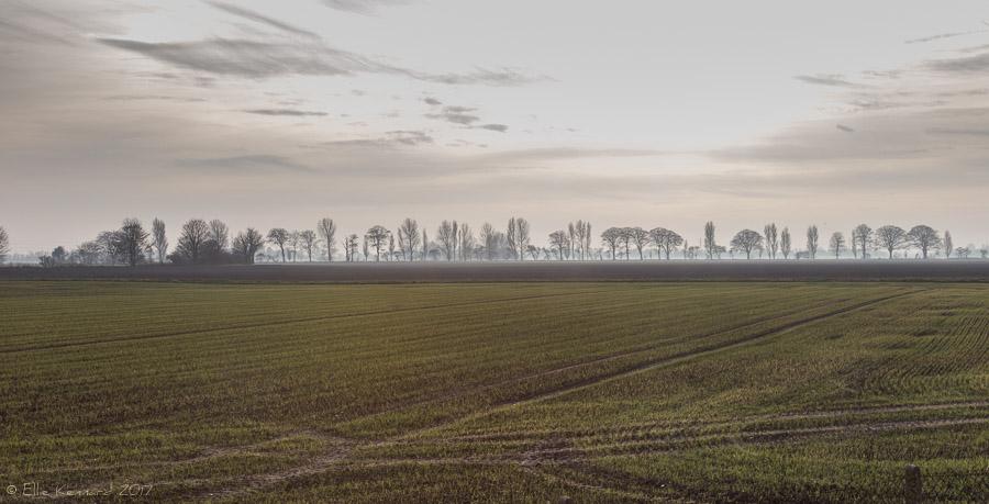 Fog over fields, Lincolnshire - Ellie Kennard 2016