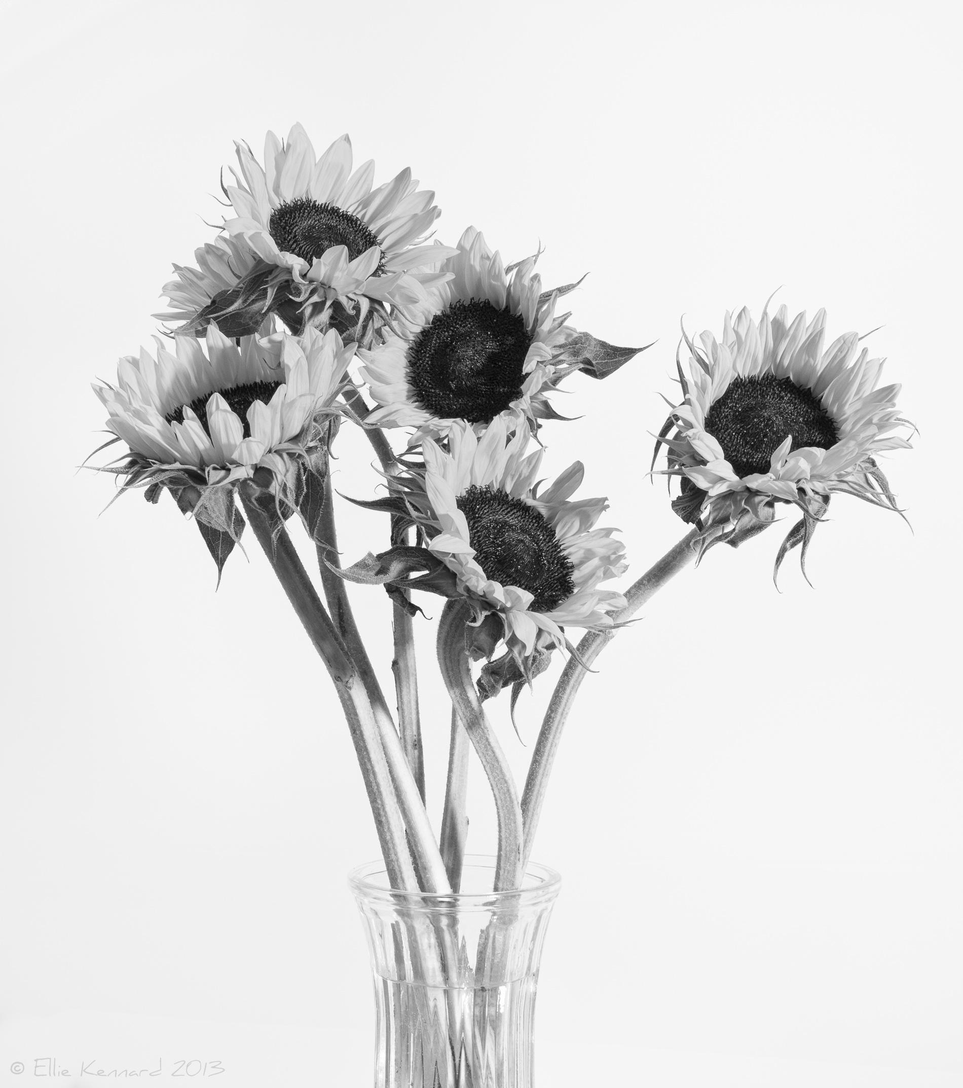On White - Ellie Kennard 2013