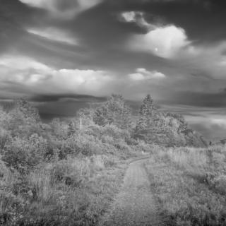 Path - Ellie Kennard 2013
