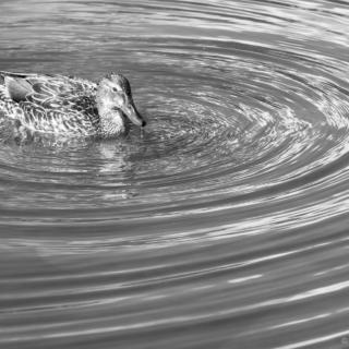 Flowing - Ellie Kennard 2013