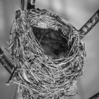 Cuckoo's Nest - Ellie Kenard 2015