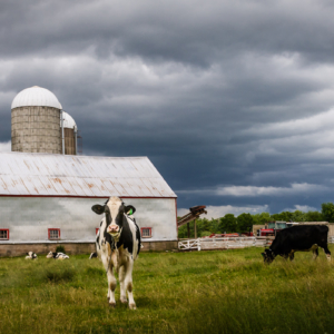 Farm, Rawdon Hills - Ellie Kennard 2012