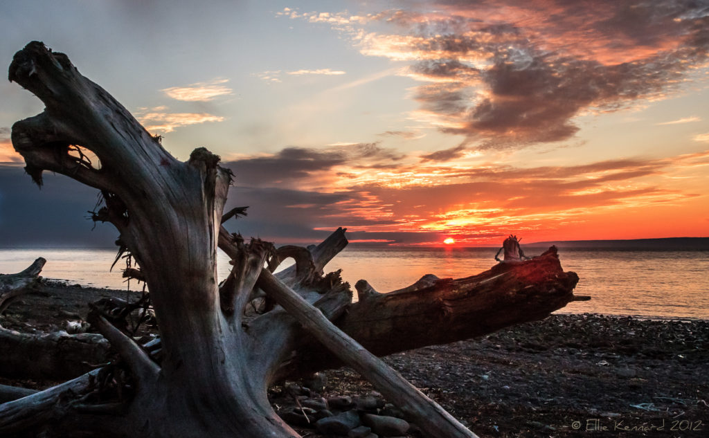 Driftwood on Huntington Point Beach, Summer Sunset - Ellie Kennard 2012