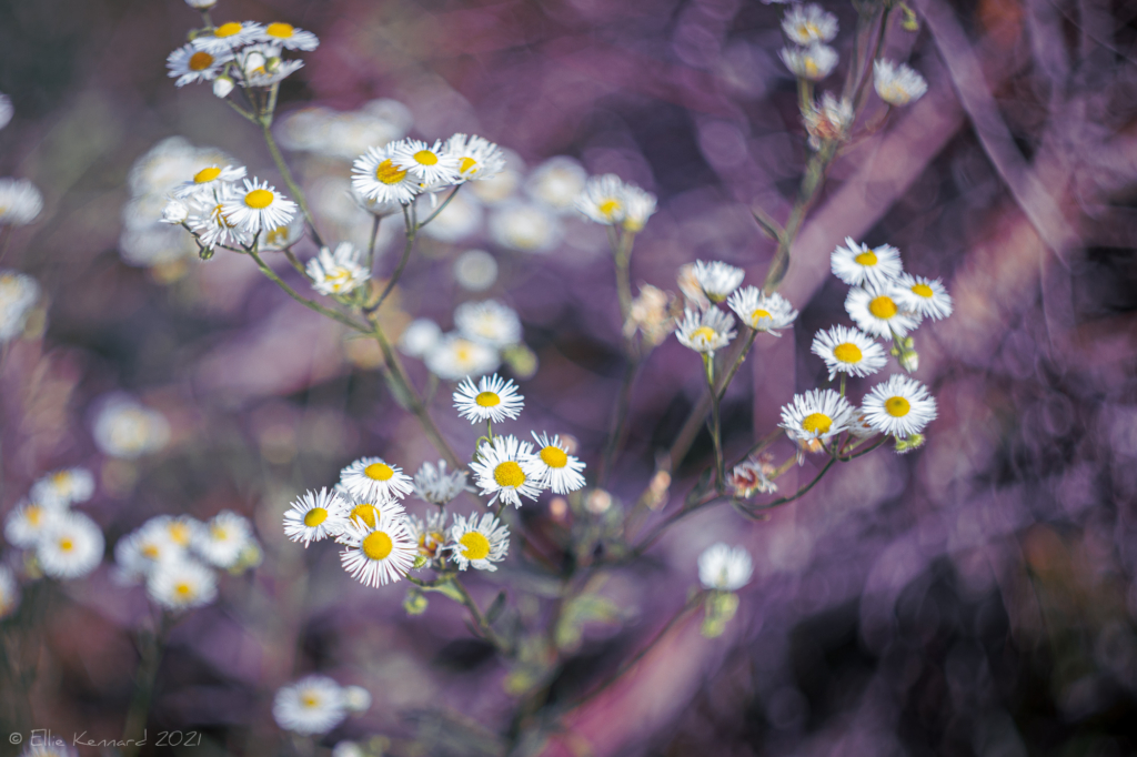 Aster Asteroids