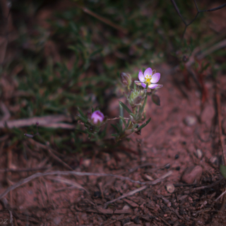 Unknown tiny flower