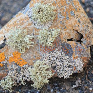 Detail Bark with lichen