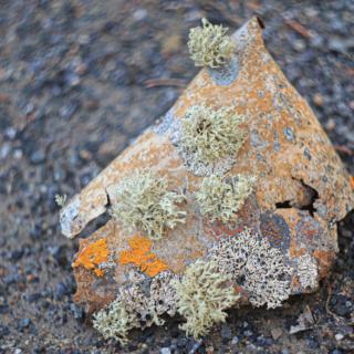 Bark with lichen
